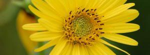 Friends of Neal Smith National Wildlife Refuge | Flower