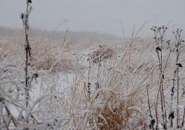 Neal Smith National Wildlife Refuge in Winter