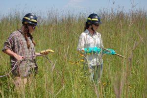 Friends of Neal Smith National Wildlife Refuge   Vegetation Management Internships