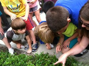 Friends of Neal Smith National Wildlife Refuge | Visitor Services / Education Internship